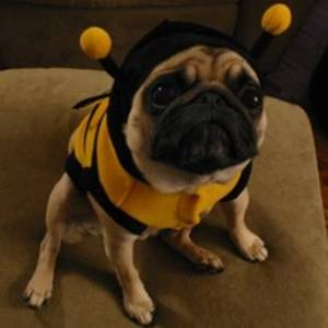 "Dog dressed as a bee with the caption ""My SPSS skills are second to none..."""