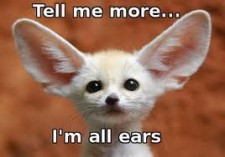 listening-animal-w-big-ears-e1381701229206